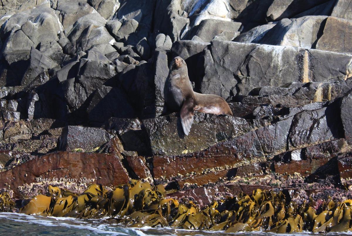 Pa's famous seal-imp
