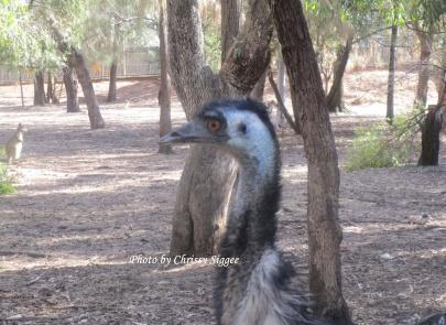 Emu 2