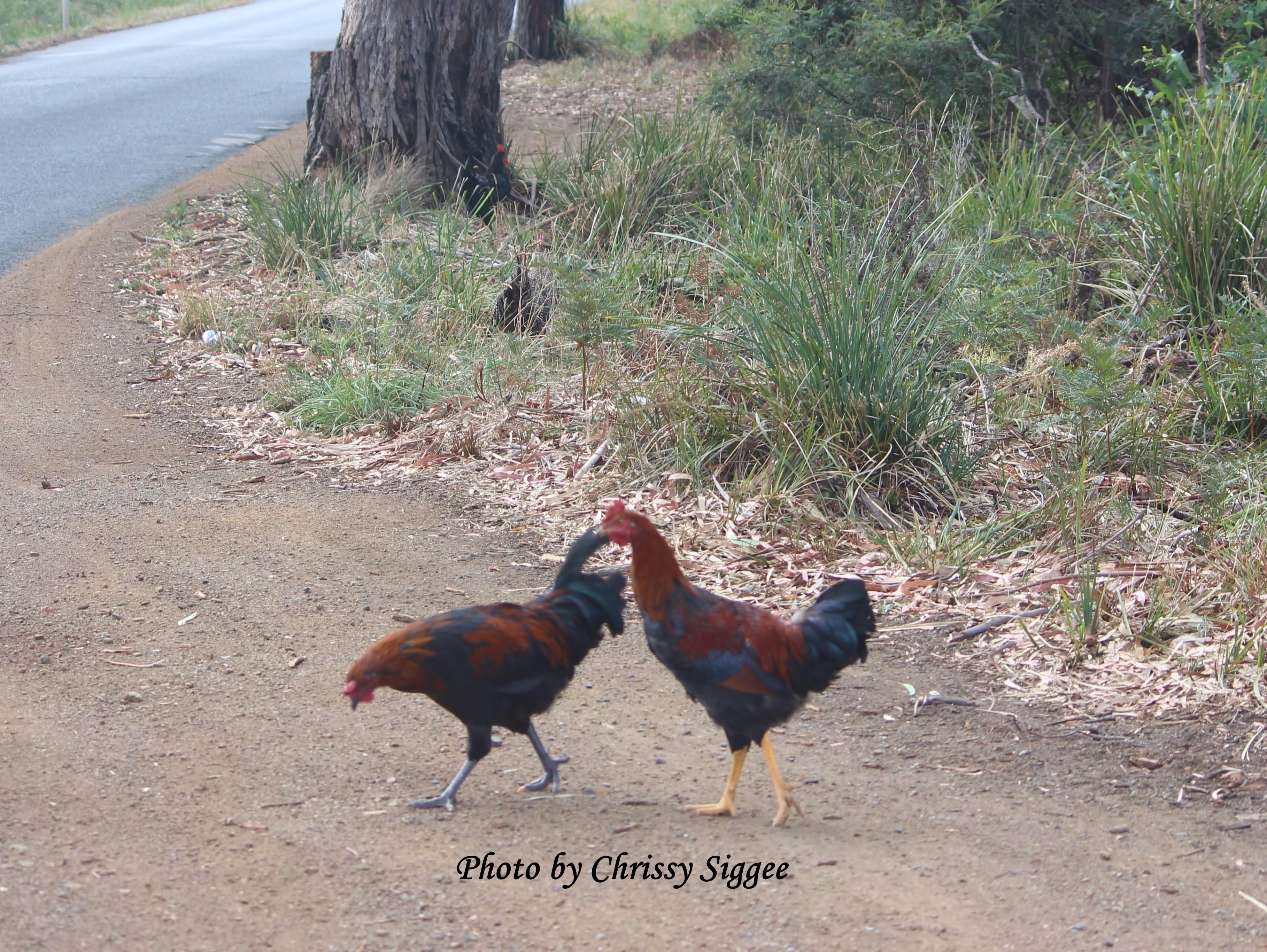 Copyright hens